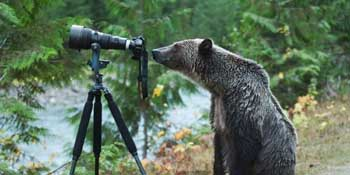 bearphoto3