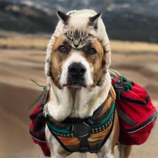 дружба кота собаки