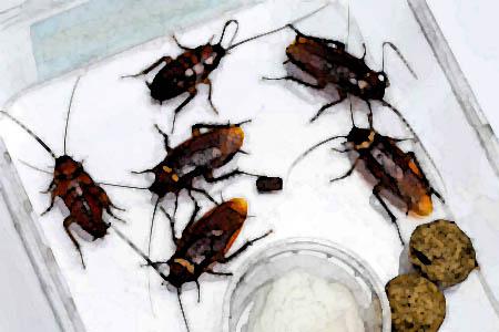 История тараканов